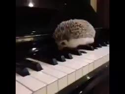Koira soittaa viulua