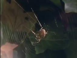 Huume hämä