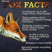 Kettu faktoja