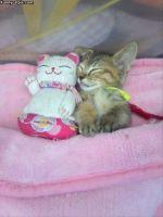Kissat köllöttelee