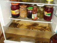 jääkaapin alalokeron tarkoitus