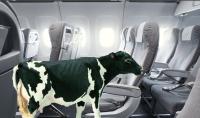 lehmälentää.jpg