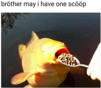 Scööp