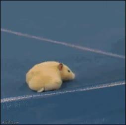 Haista vittu hiiri