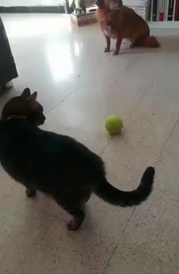 Kissa hajosi