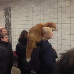 Venäjällä metroa odottamassa