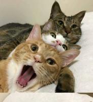 Muutama kissa