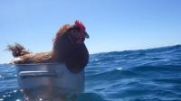 seitsemän meren seilaaja