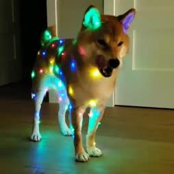 much bright
