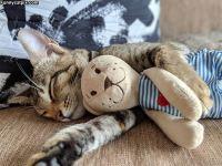 Kamustelijat nukkumassa