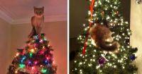 Joulukuusen koristelijat :3