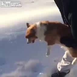 Koira heitetään lentokoneesta