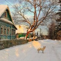 Koira kauniina talvipäivänä Mosoblastissa