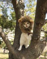 Viidakon kuningas