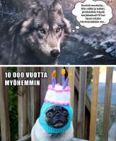 Koiran evoluutio