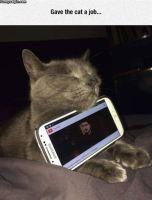 Kissan työ, lokoisa paikka ja psyykkausta