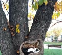 Hyvää puuta