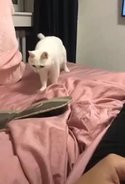 Kissi beatbox