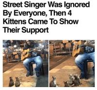 kissojakin kiinnostaa