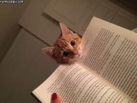 Mitä luet :3