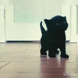 kissa tulee :3
