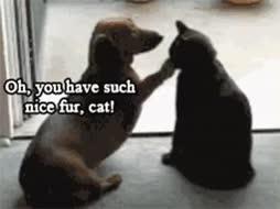 Kisse ja koiro