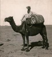 Kameli kamelin kyydissä