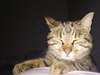Mee nyt nukkuun t. kissa :3