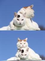 Perääntykää! Minulla on kissa enkä pelkää käyttää sitä! >:3