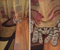 Hämis-kissa