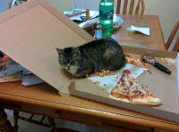 Minun pizza