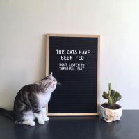 Kissat on ruokittu