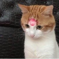 kiltti kissa :3
