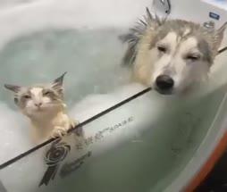 Koiranpierukylpy
