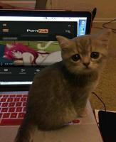 Kissakin on pettynyt