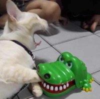 Nälkäinen kroko