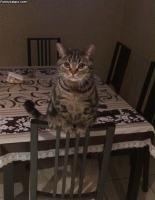 Istun tuolilla :3