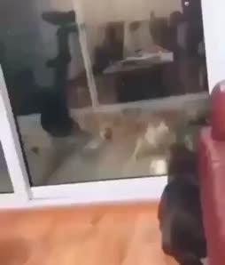 Cat 5-0
