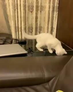 tämä kissa tarvitsee monta elämää
