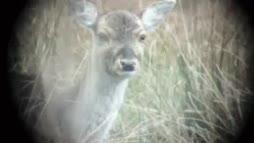 Bambi mietti liikaa