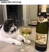 Cultured Cat