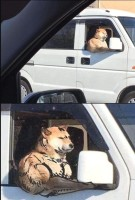 Puntti koira autoilee