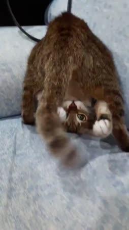 kissani ei ole yhtään outo