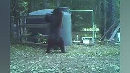 Ozzyman with bear